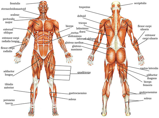 HUMAN BODY SYSTEM - Home